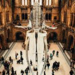 Many museums charge for admission while others are free