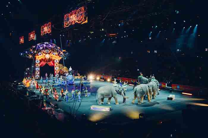 In your opinion why is the circus still a popular form of entertainment
