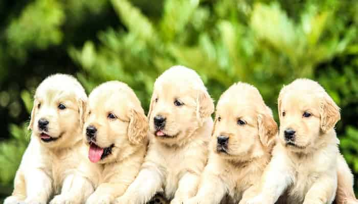 IELTS Speaking Part 1 Pets and Animals